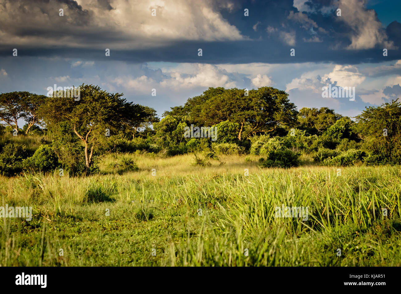 Grassland Ecosystem Pictures