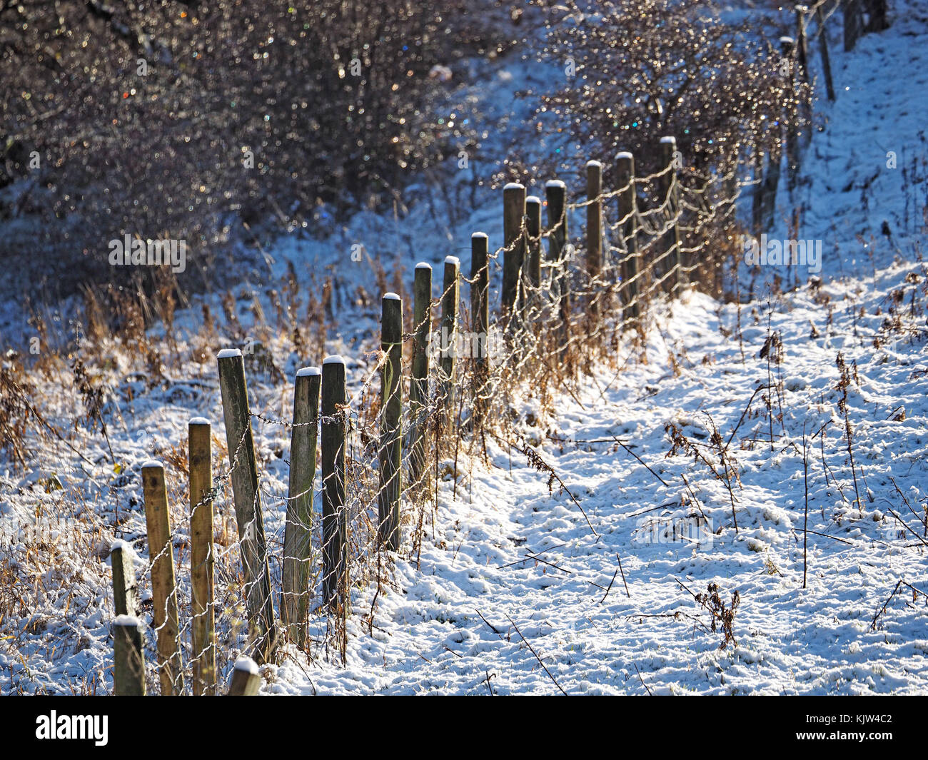 Cumbria, UK. 25th November, 2017. twinkling frost on shrubs and fence alongside snowy field as winter starts early - Stock Image