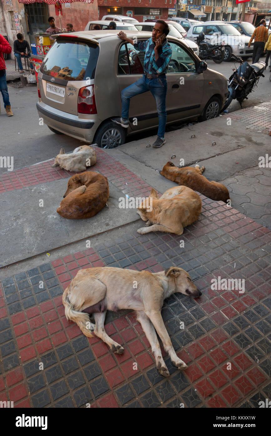 Street dogs sleeping on the streets of Amritsar, Punjab, India - Stock Image