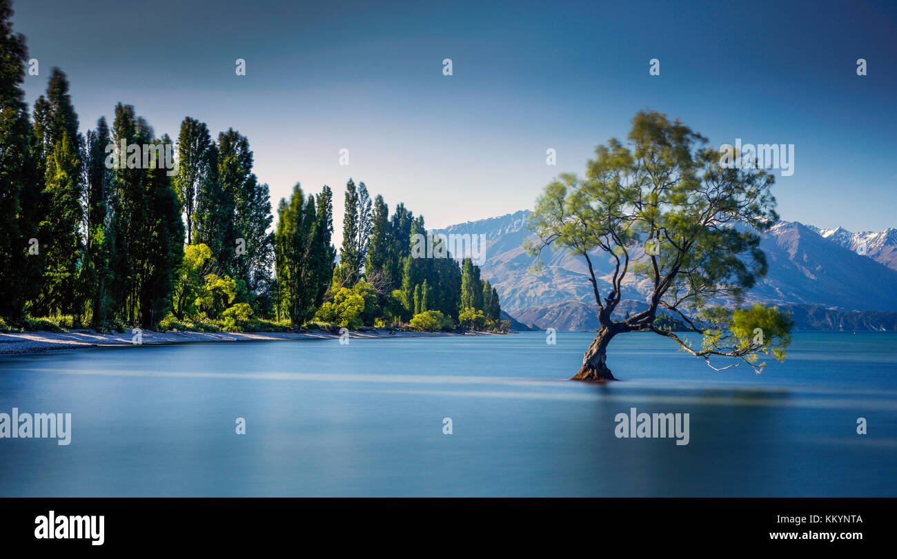 the-famous-wanaka-tree-at-lake-wanaka-otago-new-zealand-KKYNTA.jpg
