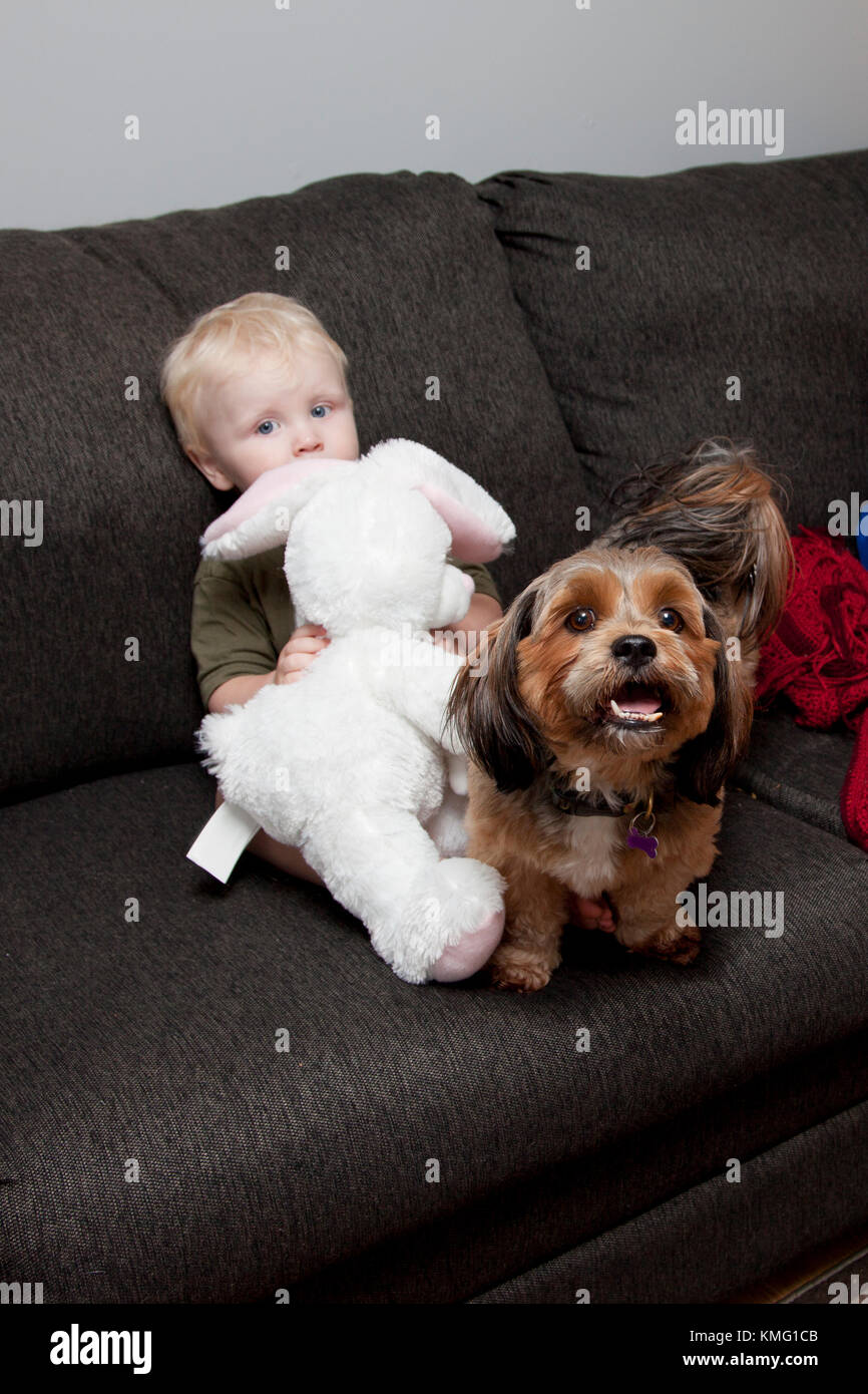 cute little blonde boy hides shyly on couch behind a stuffed rabbit with a pet dog - Stock Image