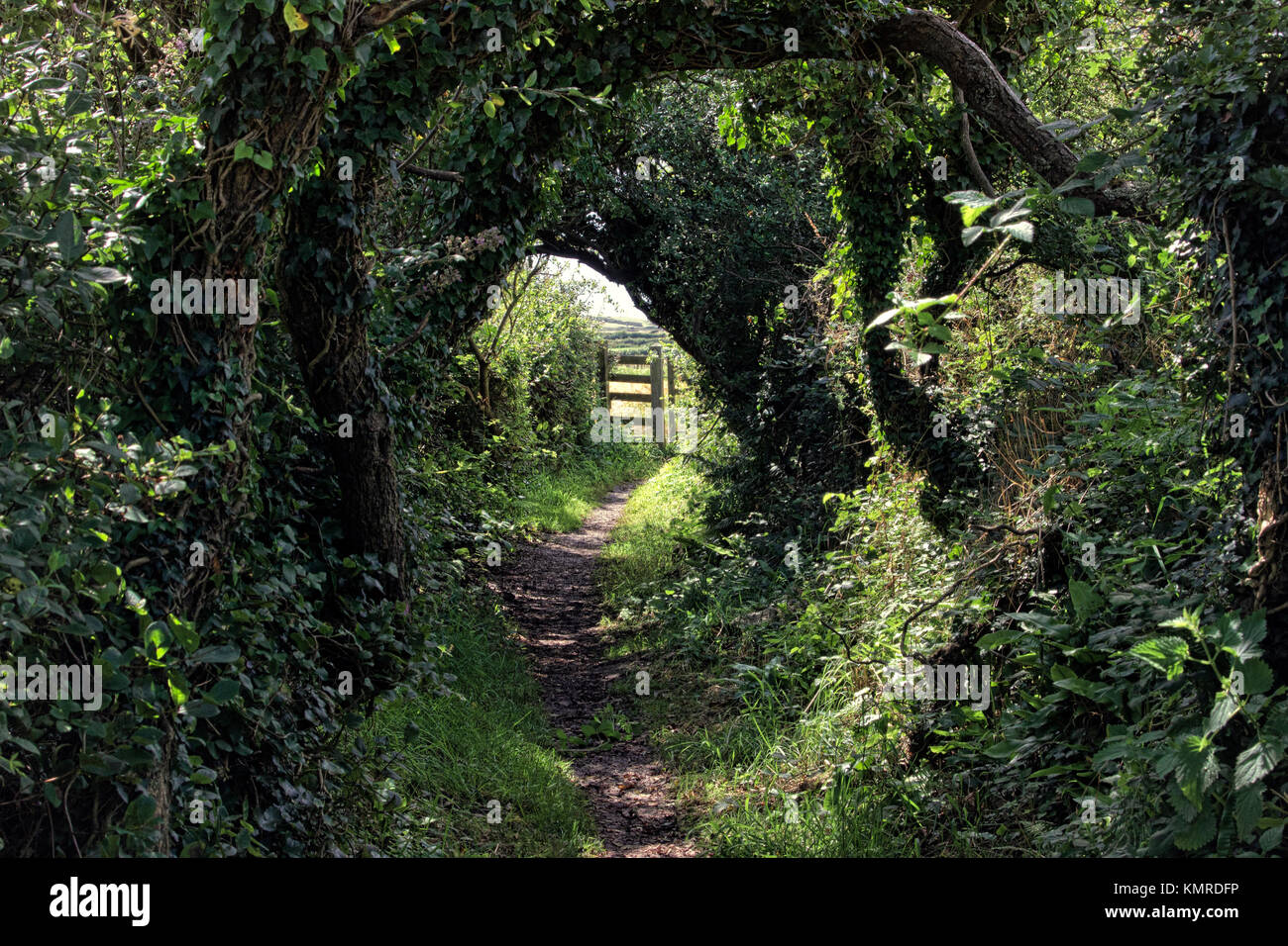 a footpath showing a tunnel of trees with a sunlit gate at the end Stock Photo