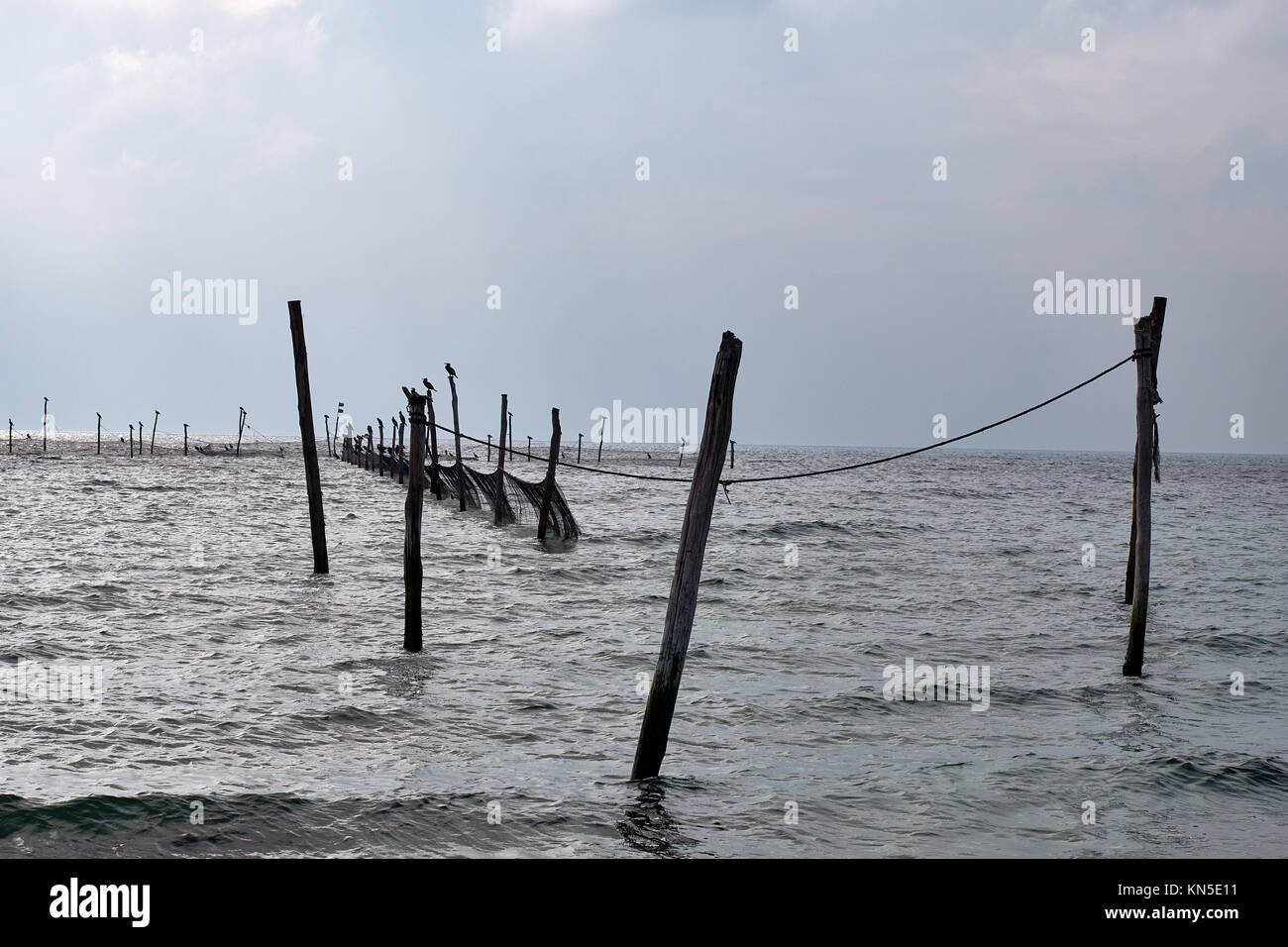 Cormorants sitting on top of poles that is fastened to the bottom of a sea to hold fishing nets - Stock Image