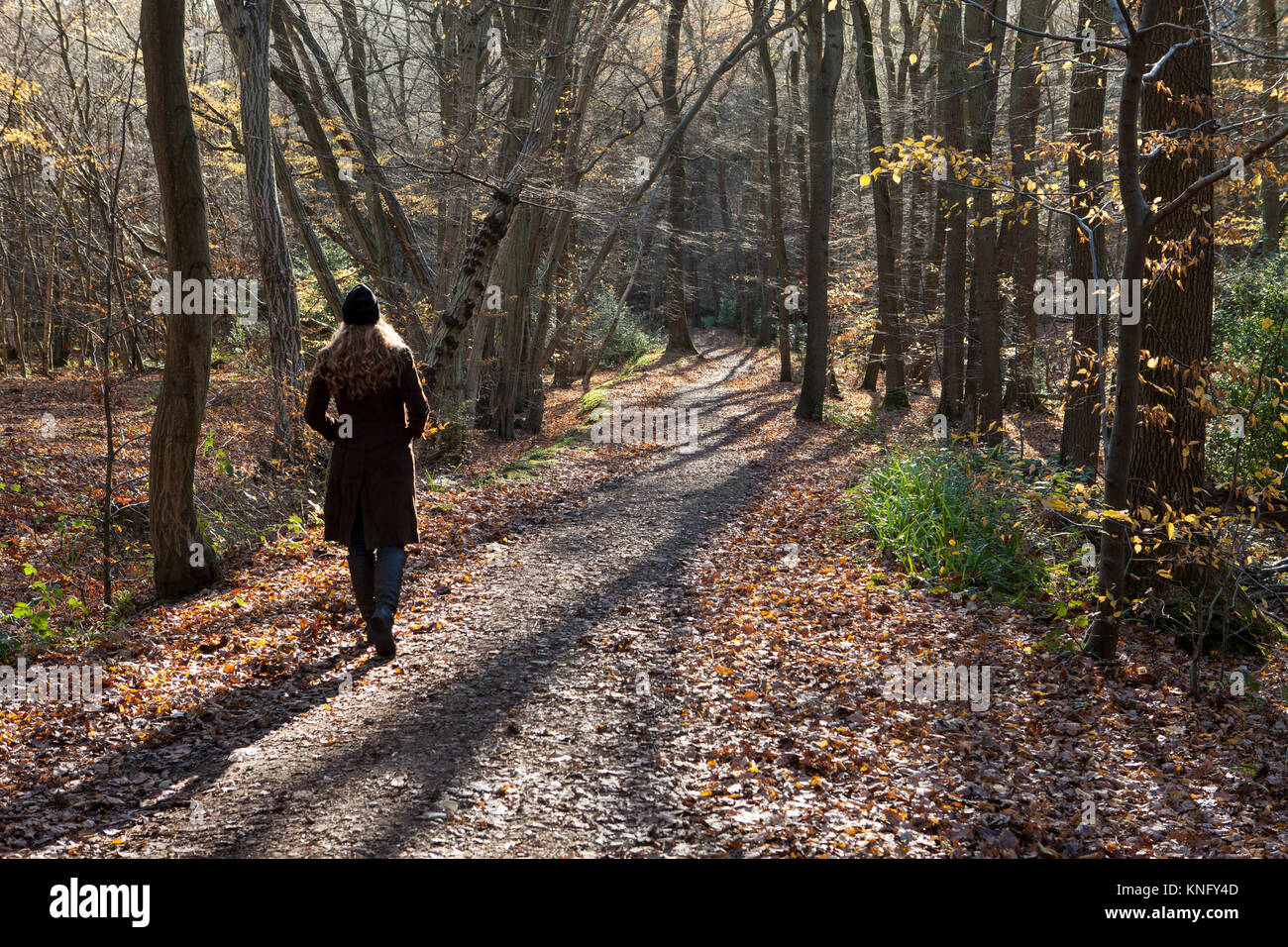 Lady walking through Broxbourne Woods, National Nature Reserve, along pathway - Stock Image