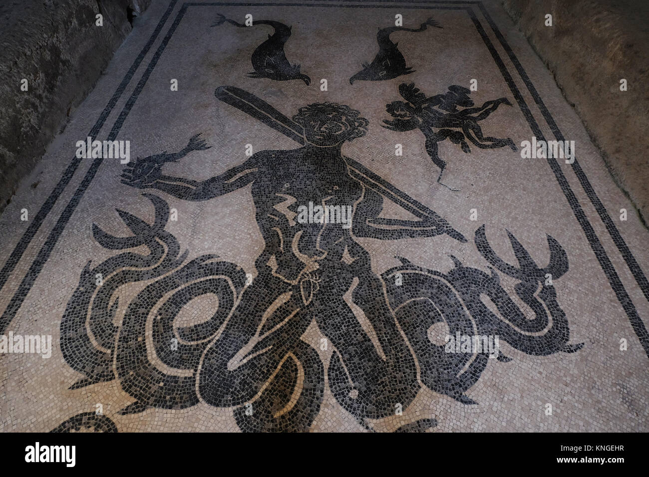 Floor mosaic at the baths at Herculaneum, depicting a mythical sea-god (Triton or Typhon?) and other sea creatures - Stock Image