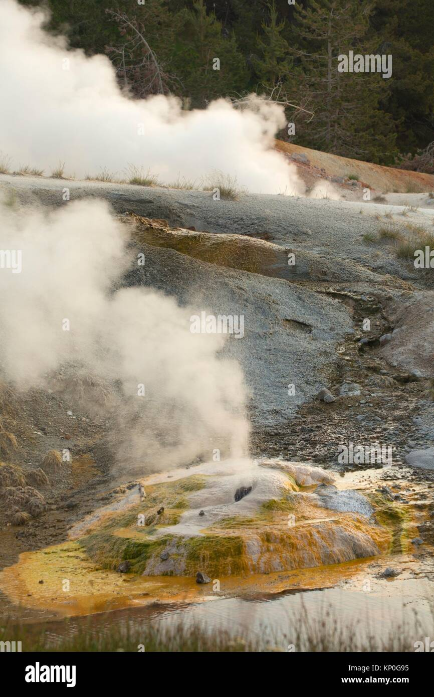 Ledge Geyser at Norris Geyser Basin, Yellowstone National Park, Wyoming. - Stock Image