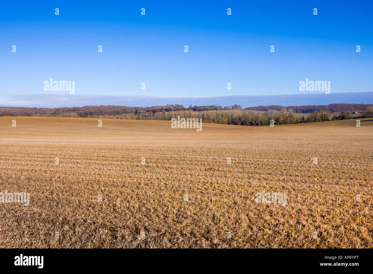 Lucerne / Alfalfa crop after third harvest becomes 'green manure' - France. - Stock Image