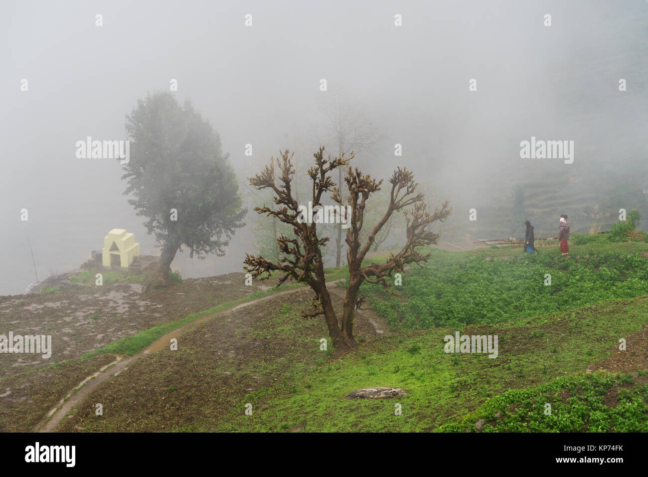 two-women-and-a-baby-walking-through-the-mist-in-ulleri-annapurna-KP74FK.jpg