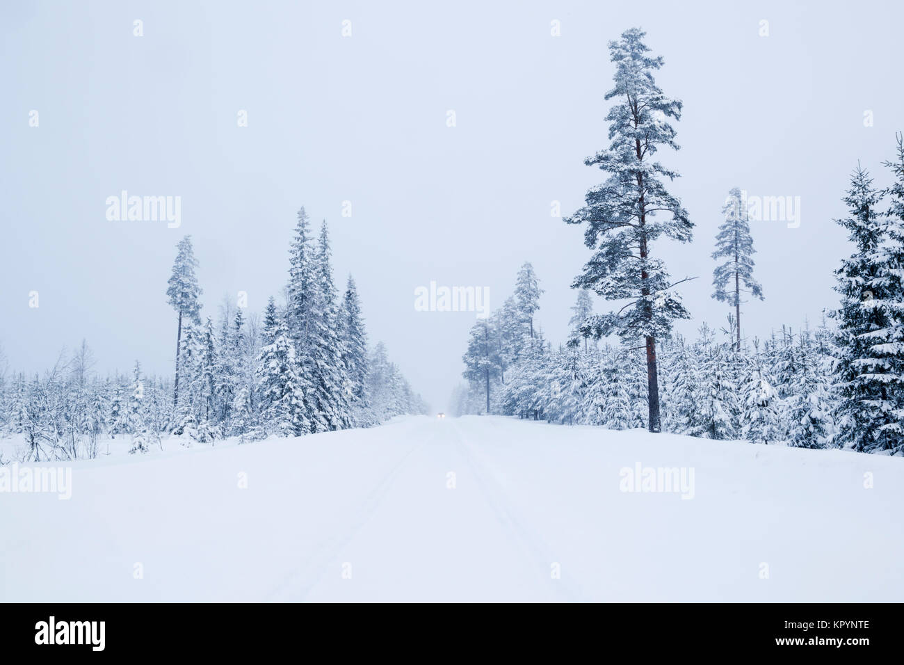 Taiga forest in winter conditions with a vehicle with headlights on approaching during a snow storm in Sweden - Stock Image