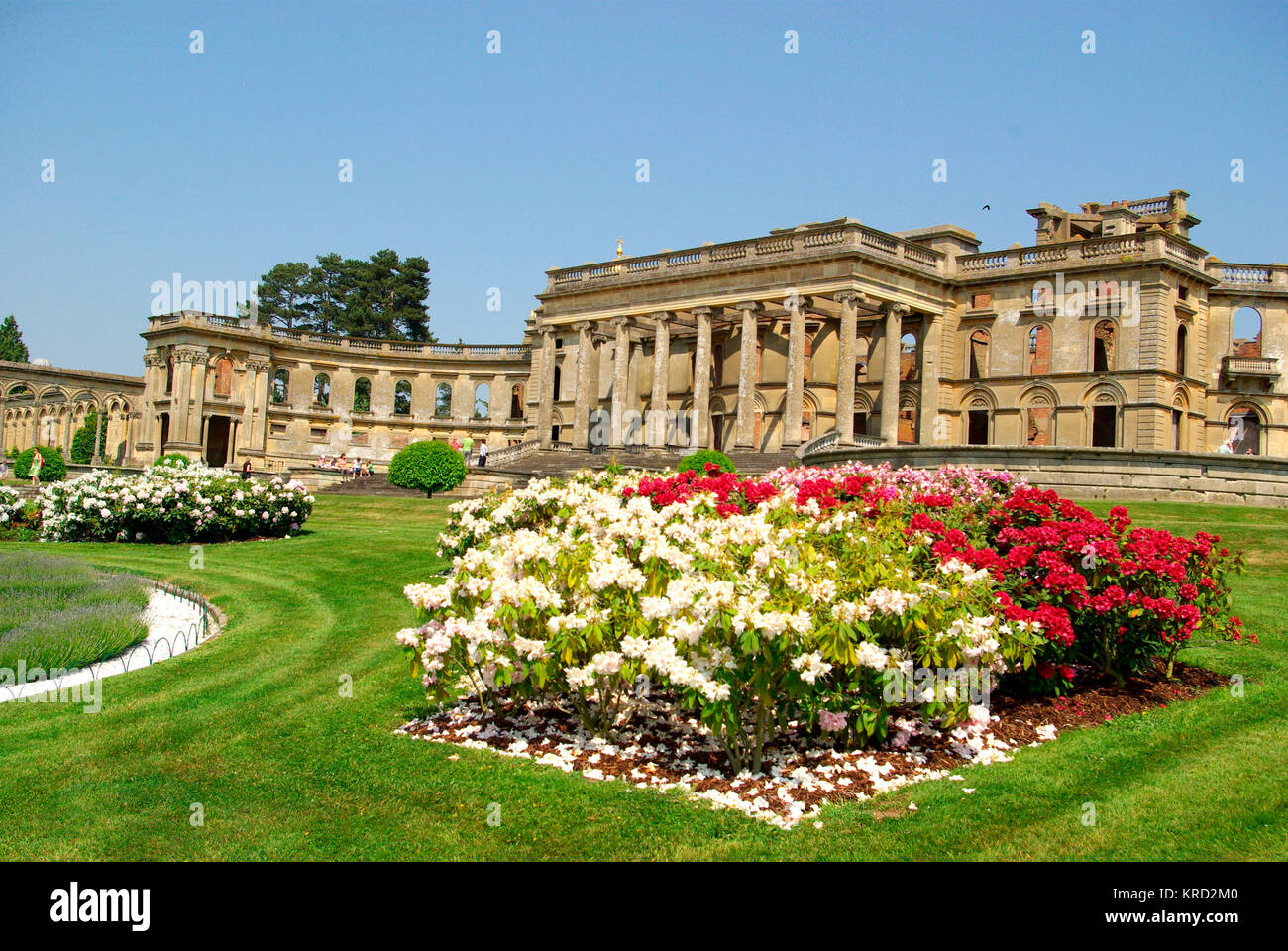 View of rhododendrons in the grounds at Witley Court, Worcestershire, with the building behind. The 19th century - Stock Image