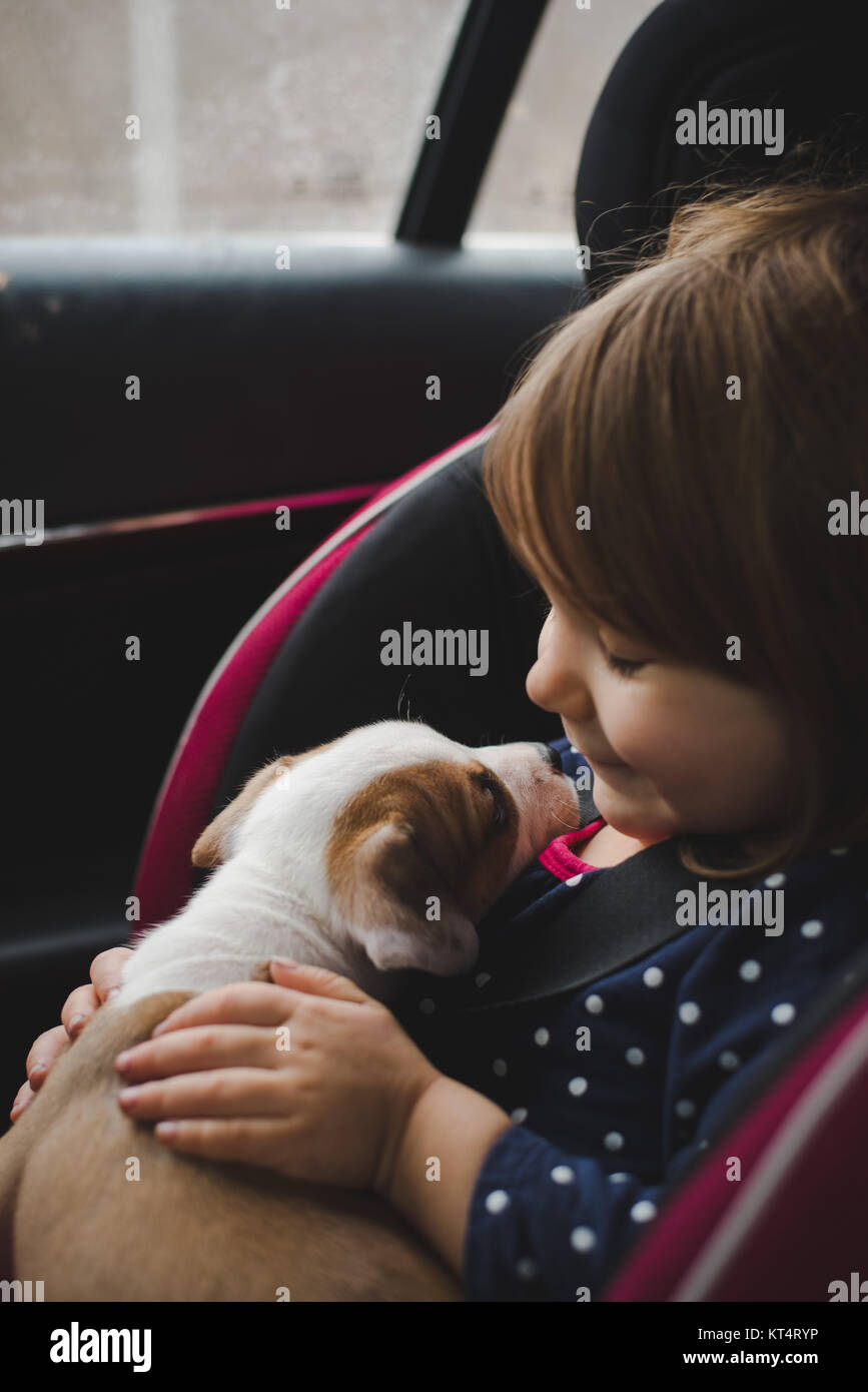 A toddler and a 6 week old pit bull beagle mix share a kiss while riding in a car. - Stock Image