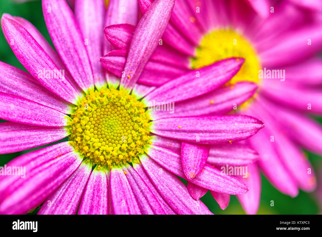 Flowers Of The World - Daisies, Spring and Summer - Stock Image