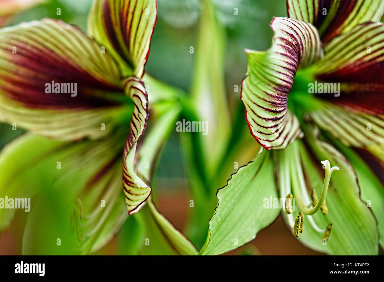 Flowers Of The World - Orchid - Stock Image