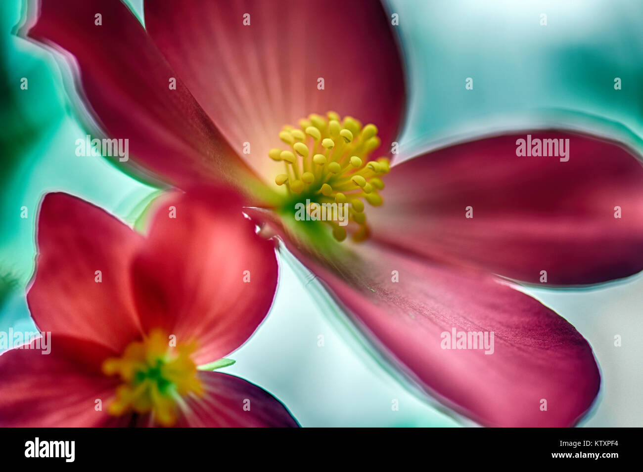 Flowers Of The World - Stock Image