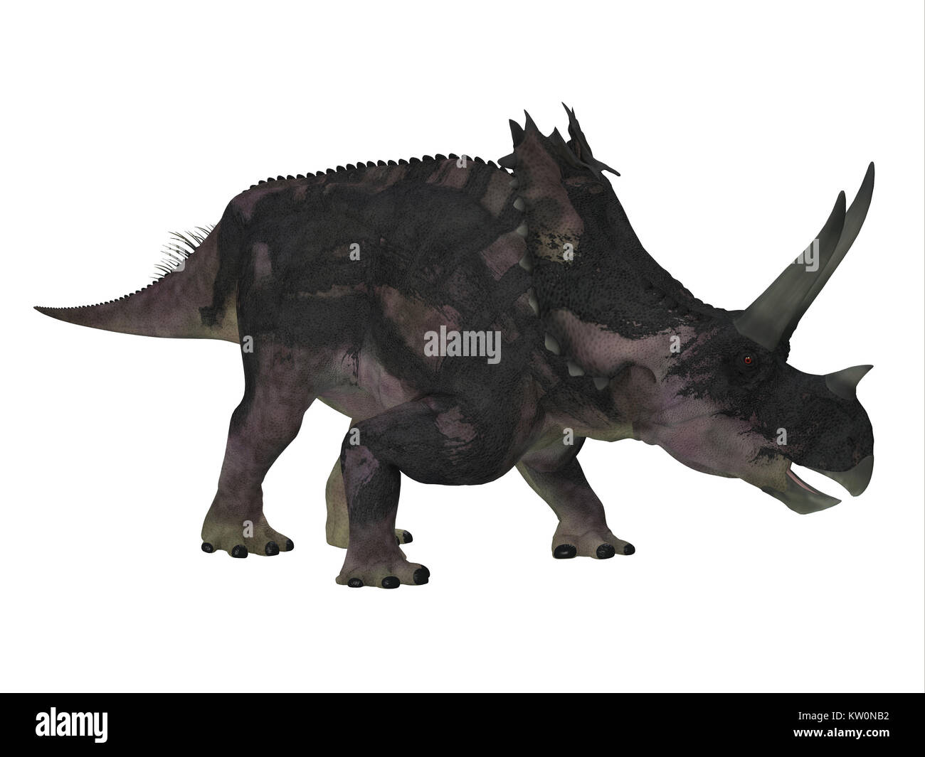 Agujaceratops Dinosaur Side Profile - Agujaceratops was a herbivorous ceratopsian dinosaur that lived in Texas, - Stock Image