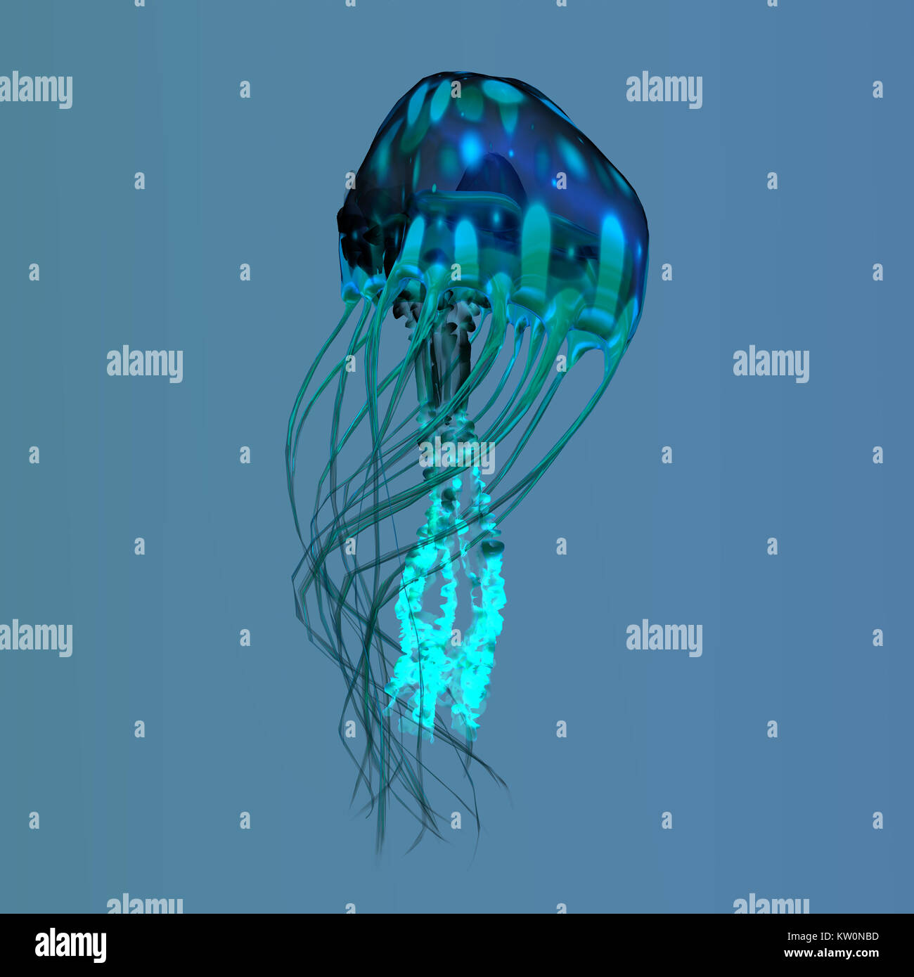Blue Green Jellyfish - The ocean jellyfish searches for fish prey and uses its poisonous tentacles to subdue the - Stock Image