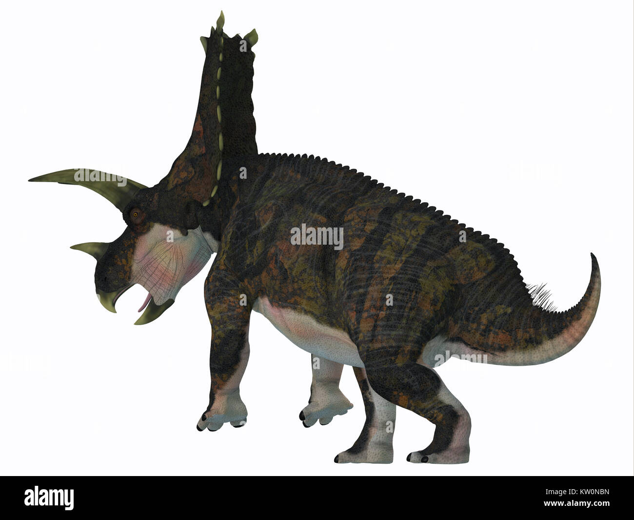 Bravoceratops Dinosaur Tail - Bravoceratops was a herbivorous ceratopsian dinosaur that lived in Texas, USA in the - Stock Image