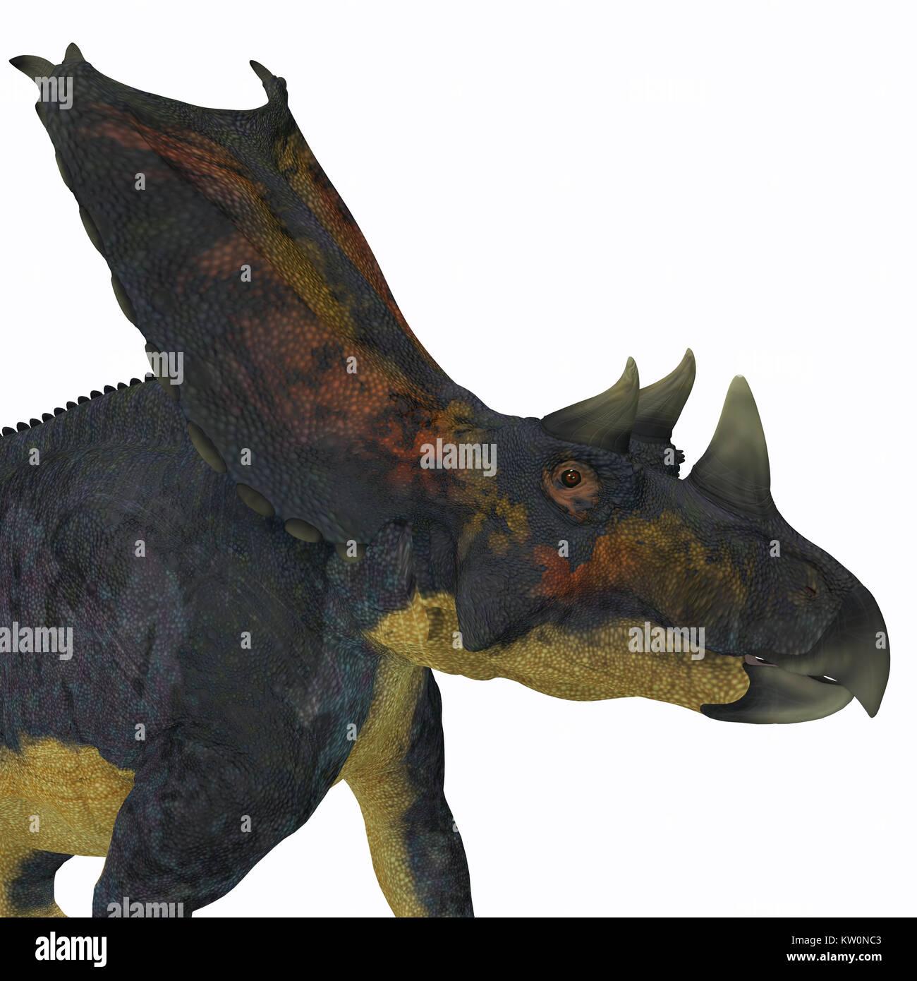 Chasmosaurus Dinosaur Head - Chasmosaurus was a herbivorous ceratopsian dinosaur that lived in Alberta, Canada during - Stock Image