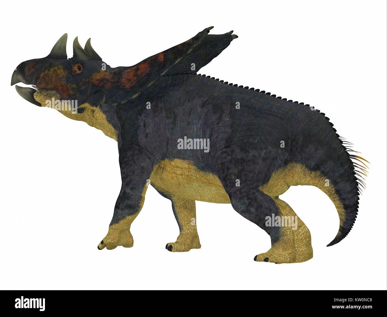 Chasmosaurus Dinosaur Tail - Chasmosaurus was a herbivorous ceratopsian dinosaur that lived in Alberta, Canada during - Stock Image