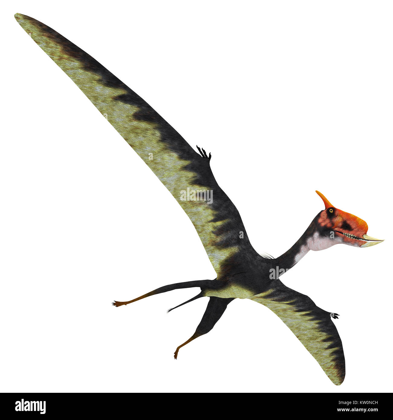 Dsungaripterus Reptile Wings Spread - This carnivorous pterosaur lived in China in the Cretaceous Period and preyed - Stock Image