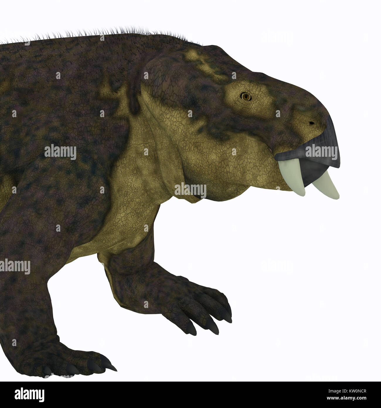 Placerias Dinosaur Head - Placerias was a herbivorous dicynodont dinosaur that lived in Arizona, USA in the Triassic - Stock Image