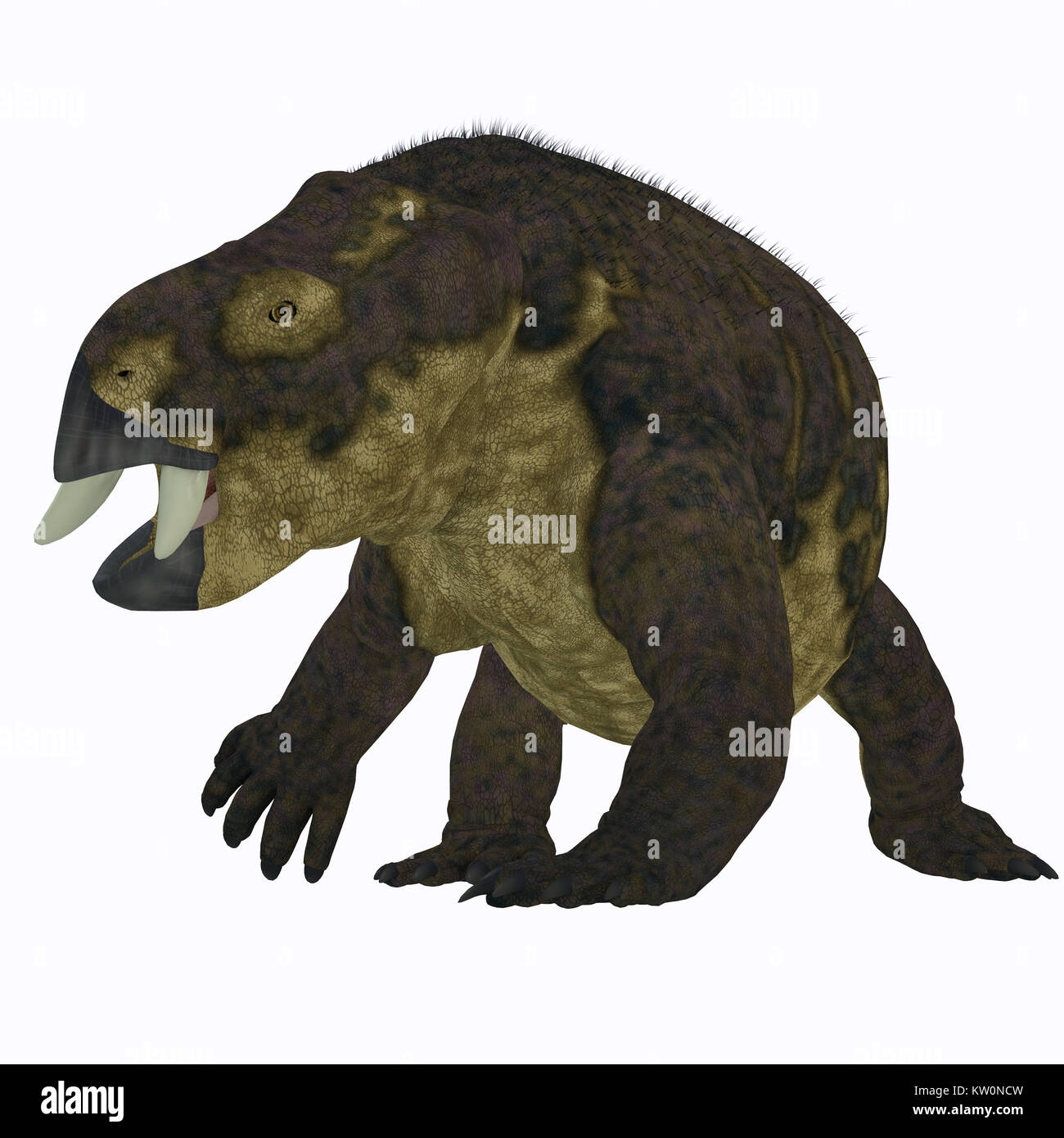 Placerias Dinosaur on White - Placerias was a herbivorous dicynodont dinosaur that lived in Arizona, USA in the - Stock Image