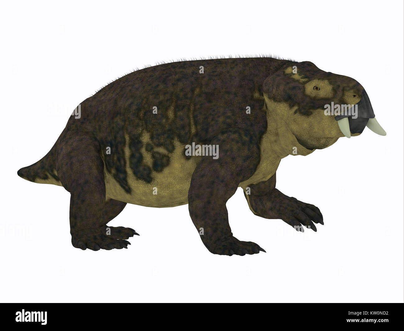 Placerias Dinosaur Side Profile - Placerias was a herbivorous dicynodont dinosaur that lived in Arizona, USA in - Stock Image