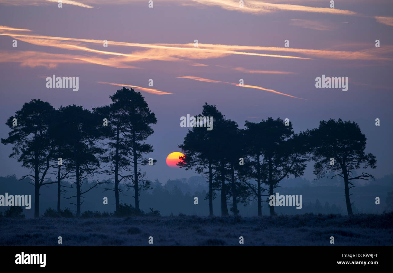 Sunrise in the New Forest - Stock Image