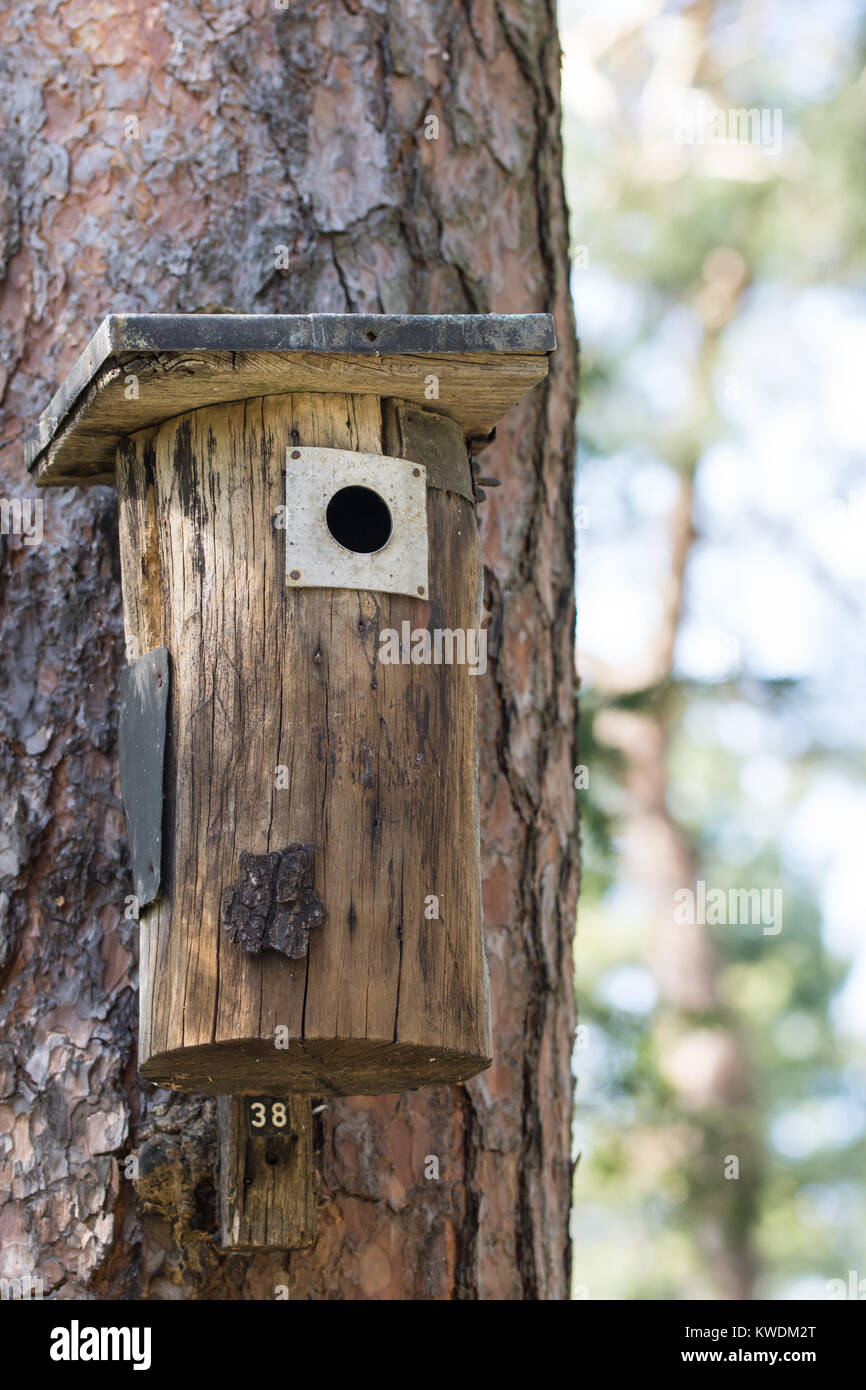 Wood Bird Shelter : Old branch hole in tree stock photos