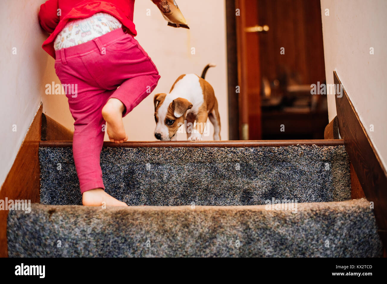 A toddler girl walks up the stairs while a puppy walks toward her. - Stock Image