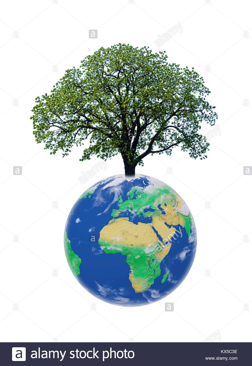 world-tree-on-the-planet-earth-the-inter