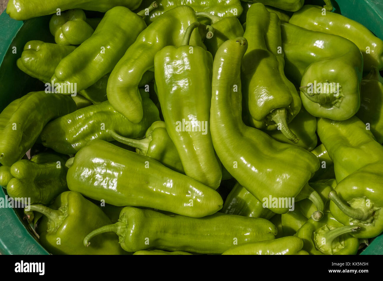 Vegetables boxed up and ready to ship to a local food bank - Stock Image