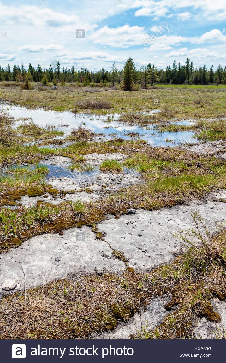 spring-flooding-limestone-plain-of-carde