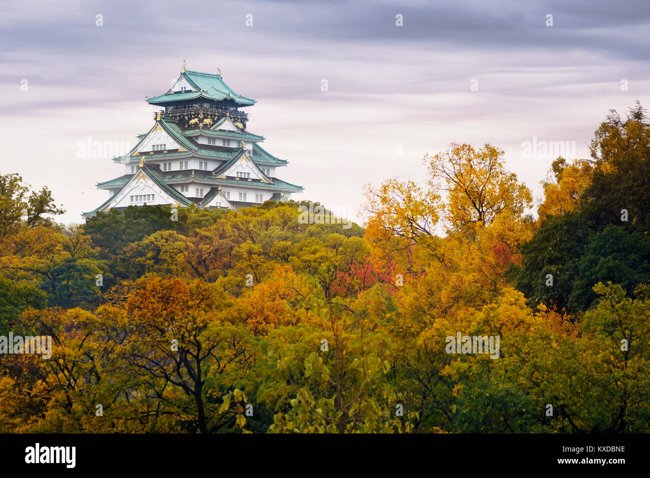 Osaka Castle, Osakajo on a hill surrounded by colorful yellow and red trees in a misty morning autumn scenery - Stock Image