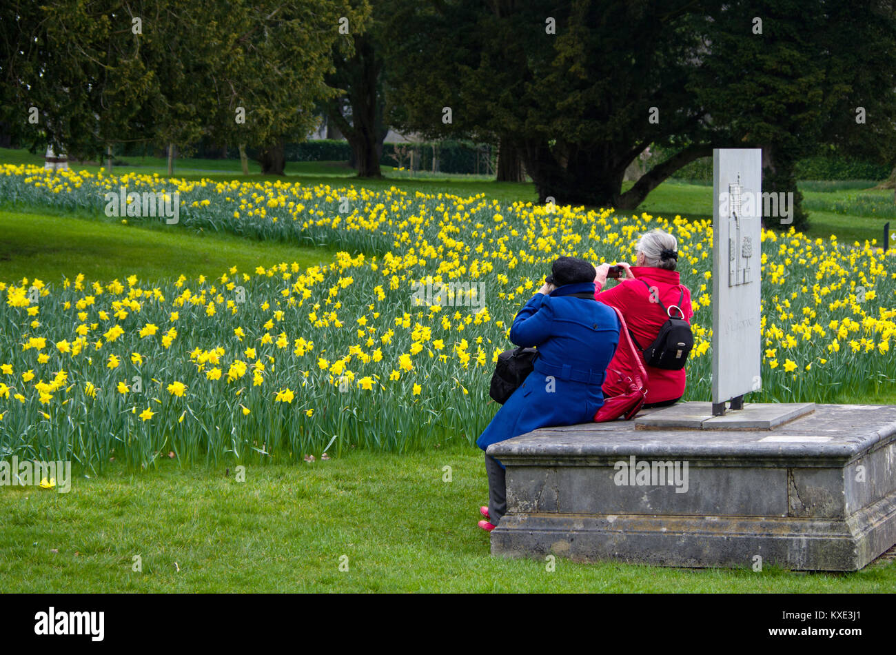 Two senior ladies, in contrasting red and blue coats, photographing Spring flowers at Trentham Gardens; Stoke On - Stock Image