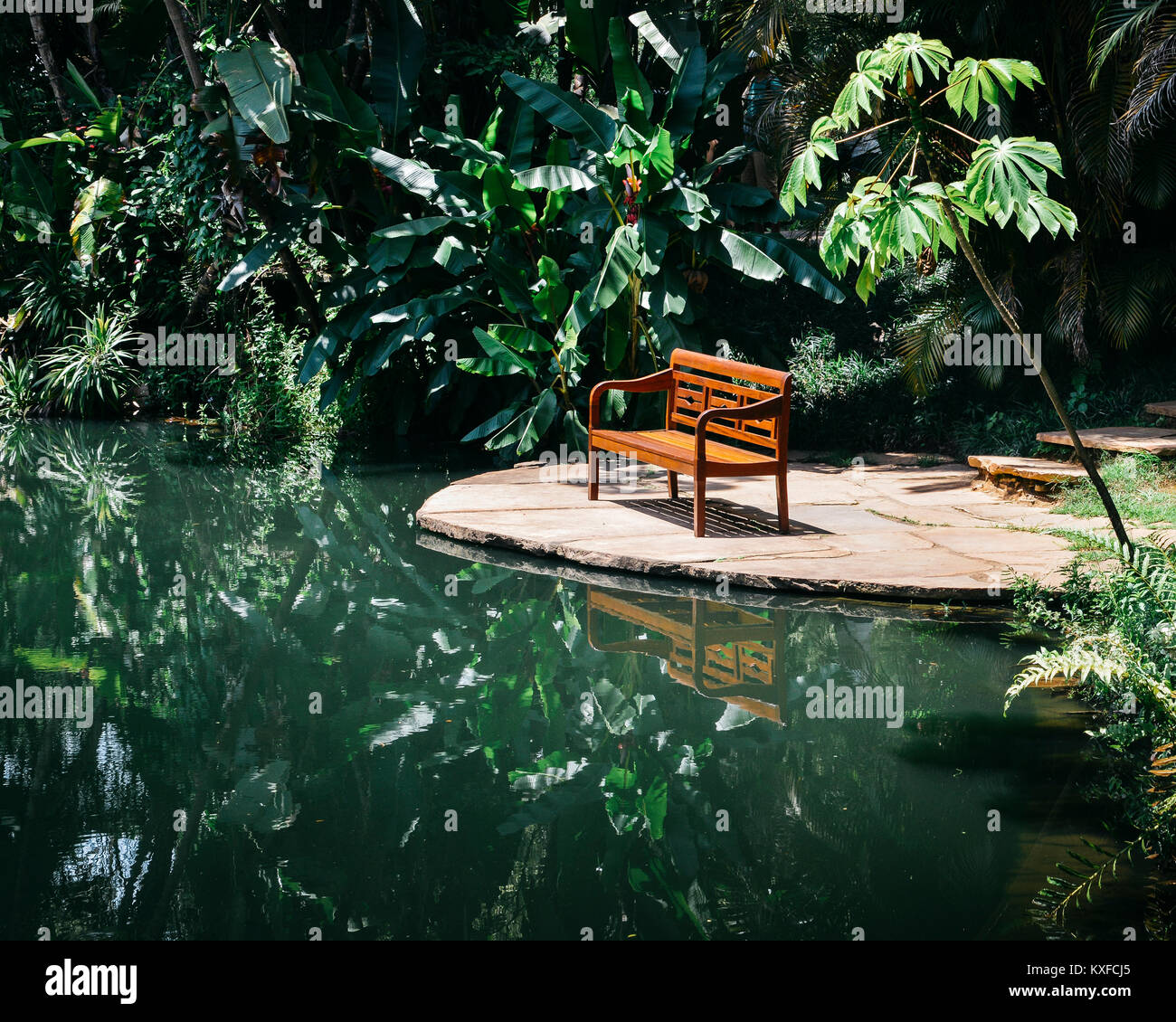 bench-in-tropical-florest-KXFCJ5.jpg