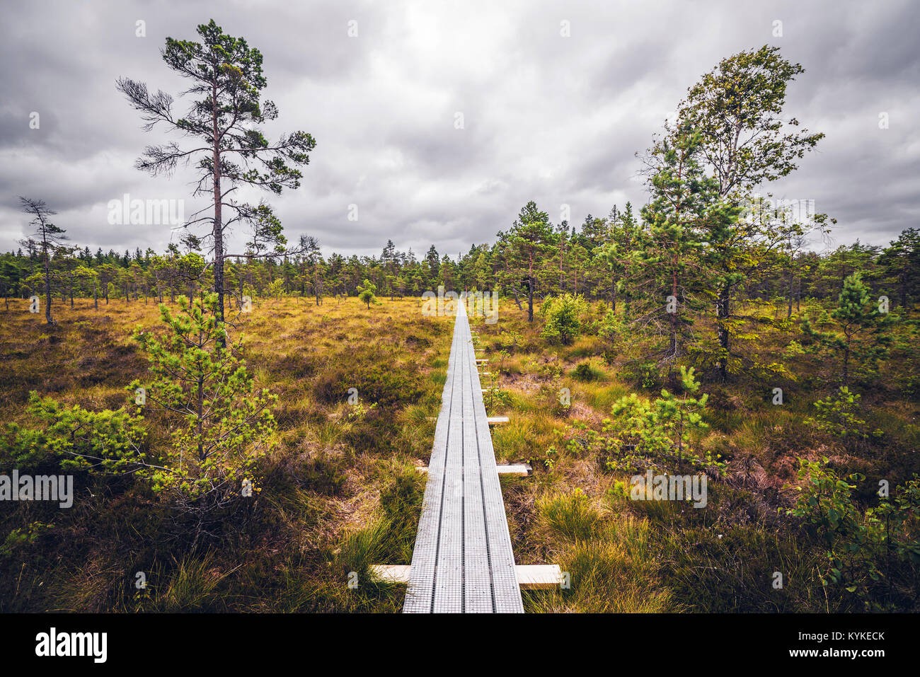 Wooden trail in the wilderness with trees and grass under a cloudy sky in a bog - Stock Image
