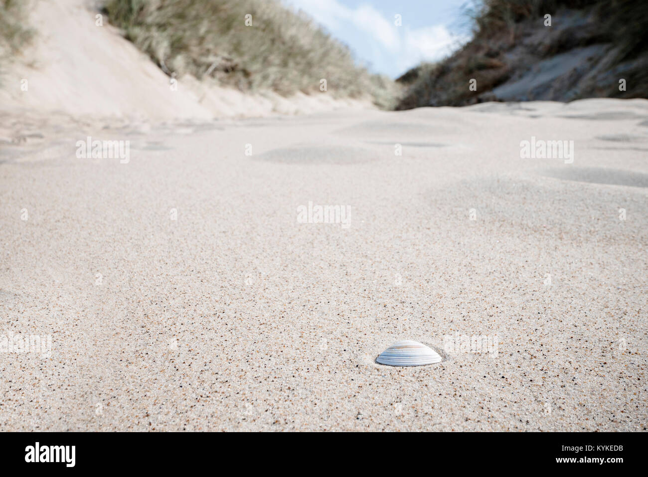 Seashell in the sand under a blue sky in the summer - Stock Image
