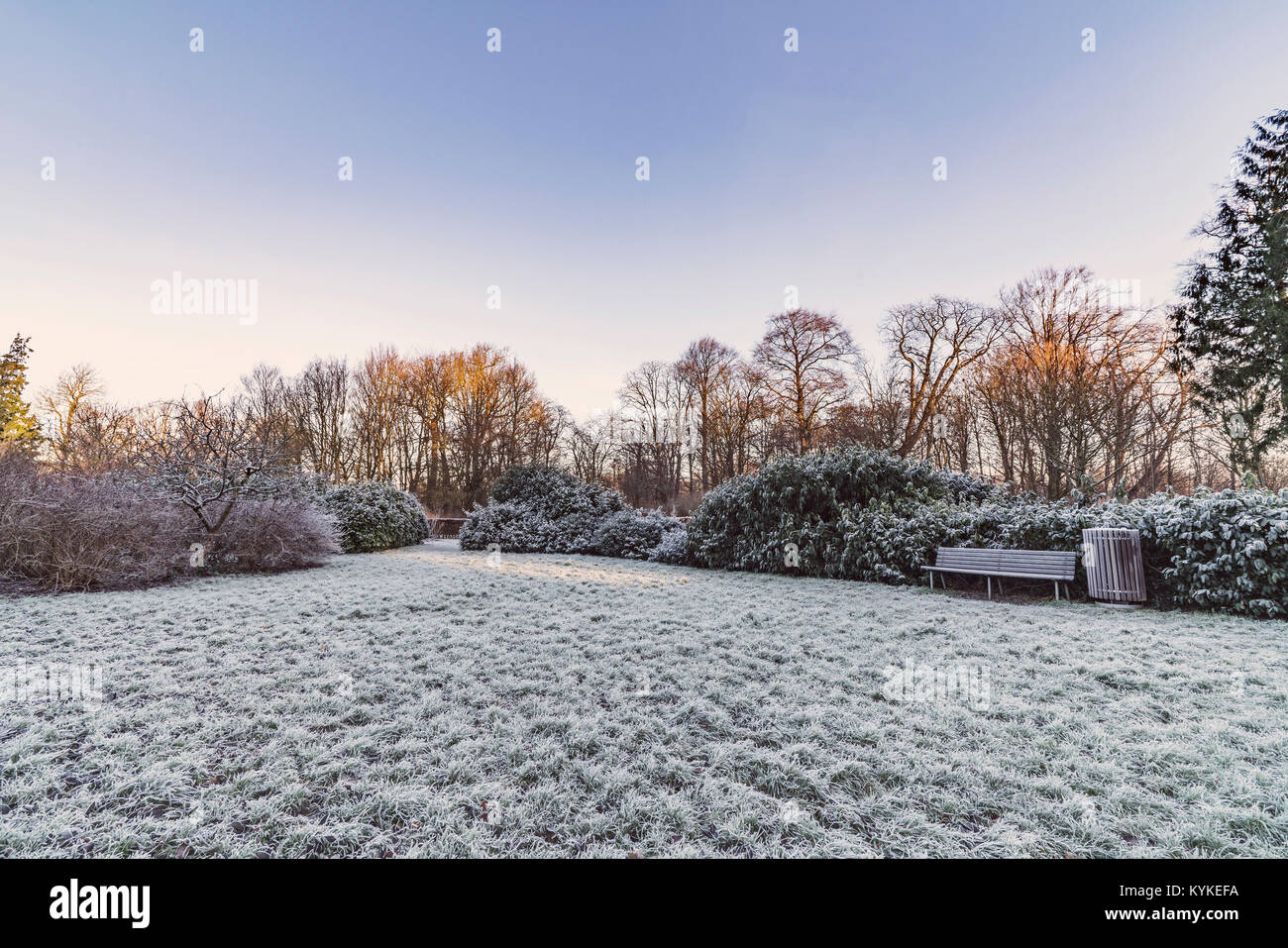 Park in the winter with a wooden bench and frost on plants and trees in the morning - Stock Image