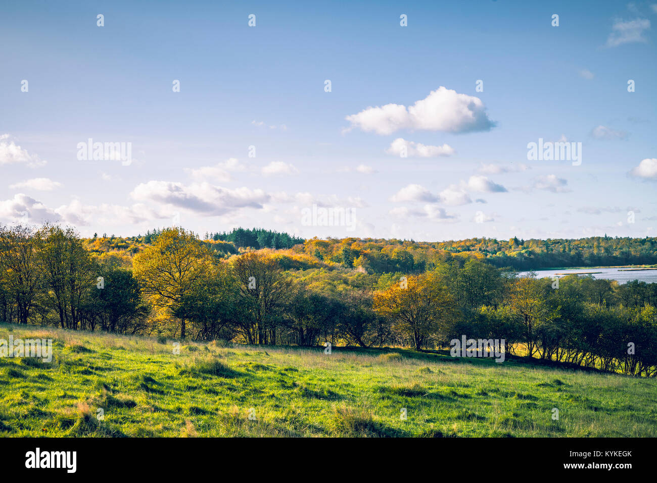Autumn landscape with colorful trees on a green field in the fall under a blue sky - Stock Image