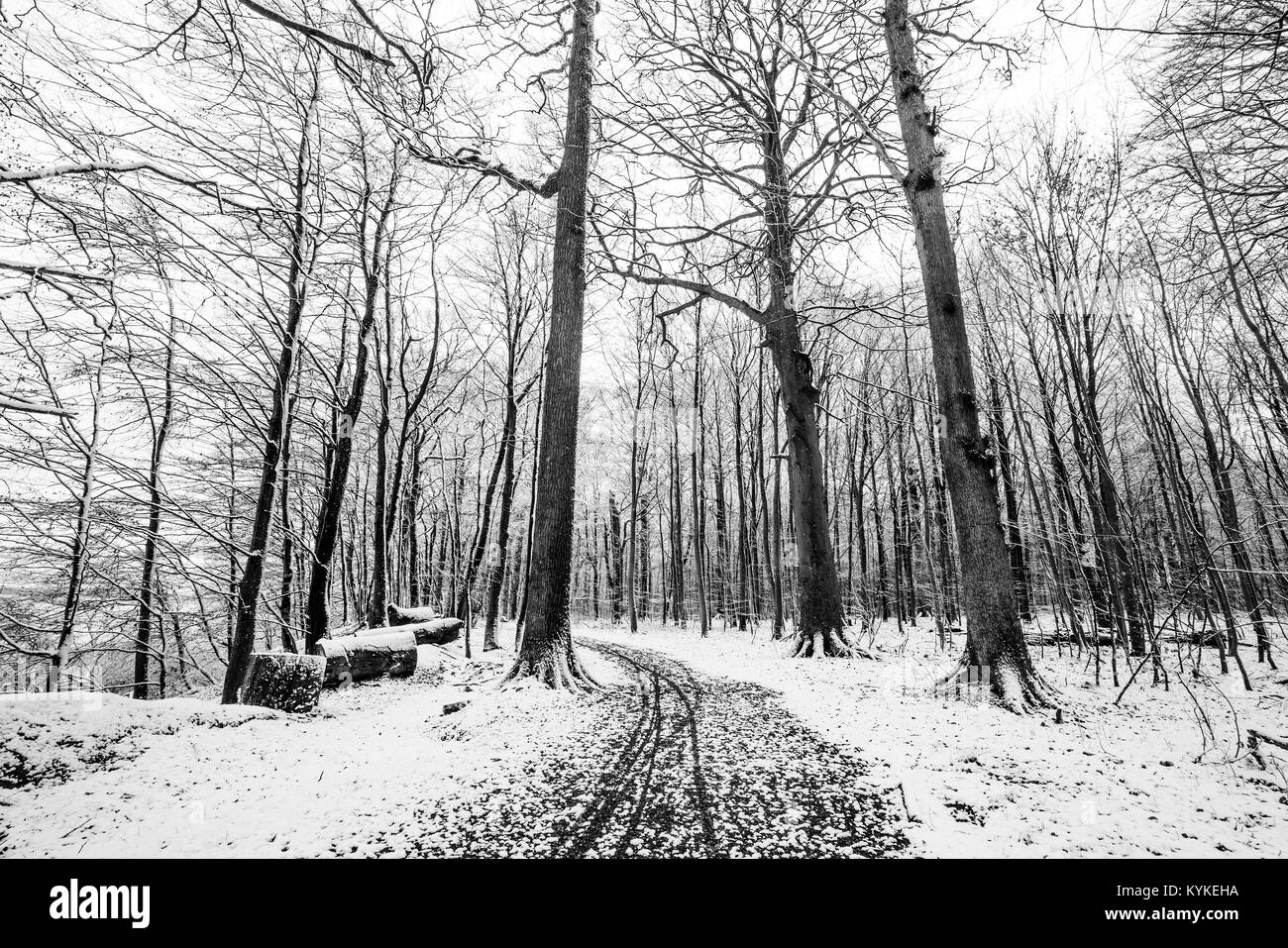 Winter scenery of a forest covered in snow in black and white colors - Stock Image