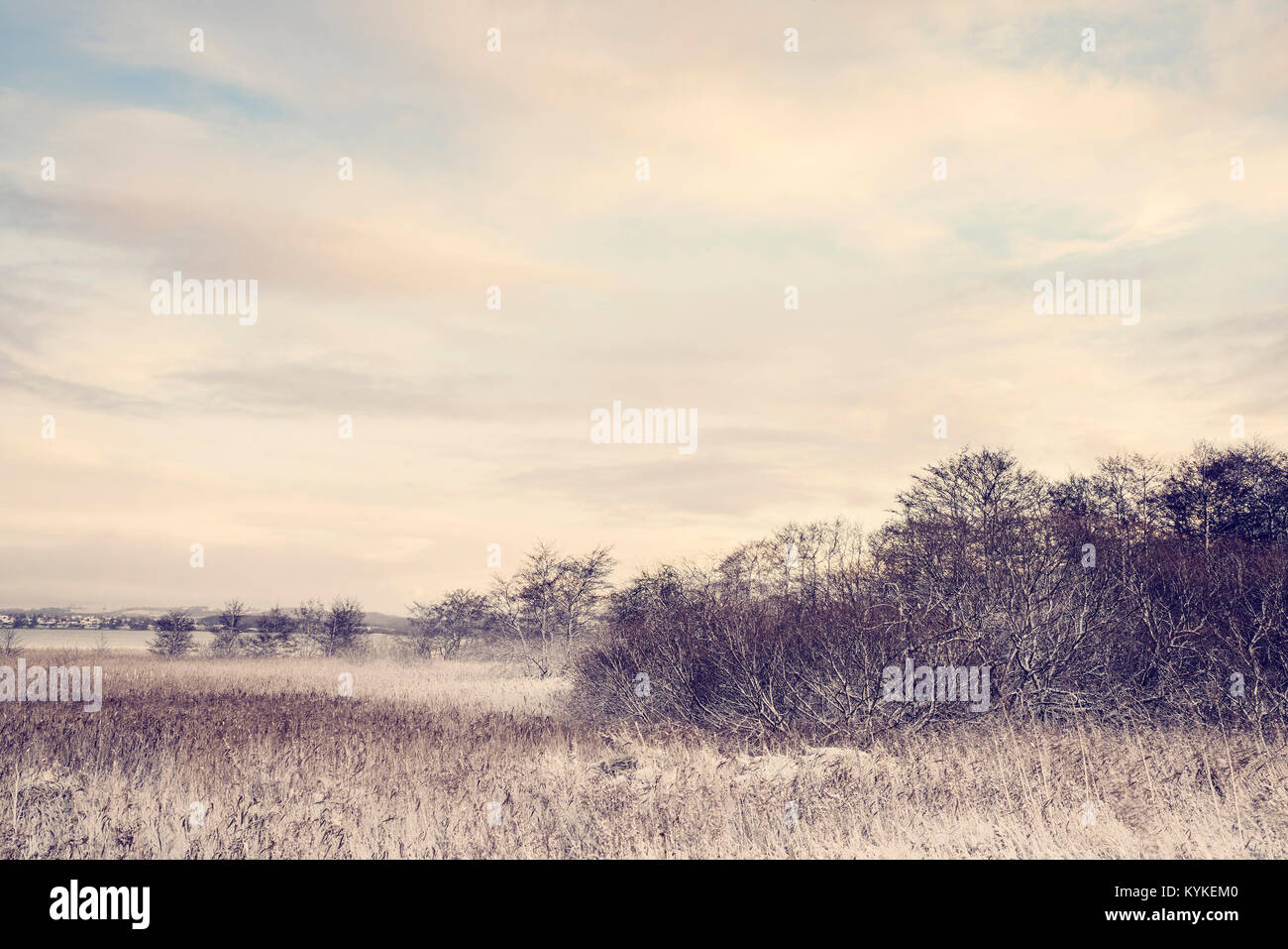 Idyllic winter landscape with frosty trees in the wilderness looking beutiful in the morning sunrise - Stock Image