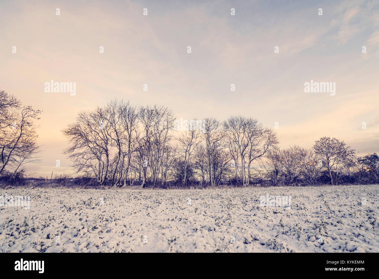 Winter landscape with barenaked trees in the morning sunrise with snow on a rural field - Stock Image