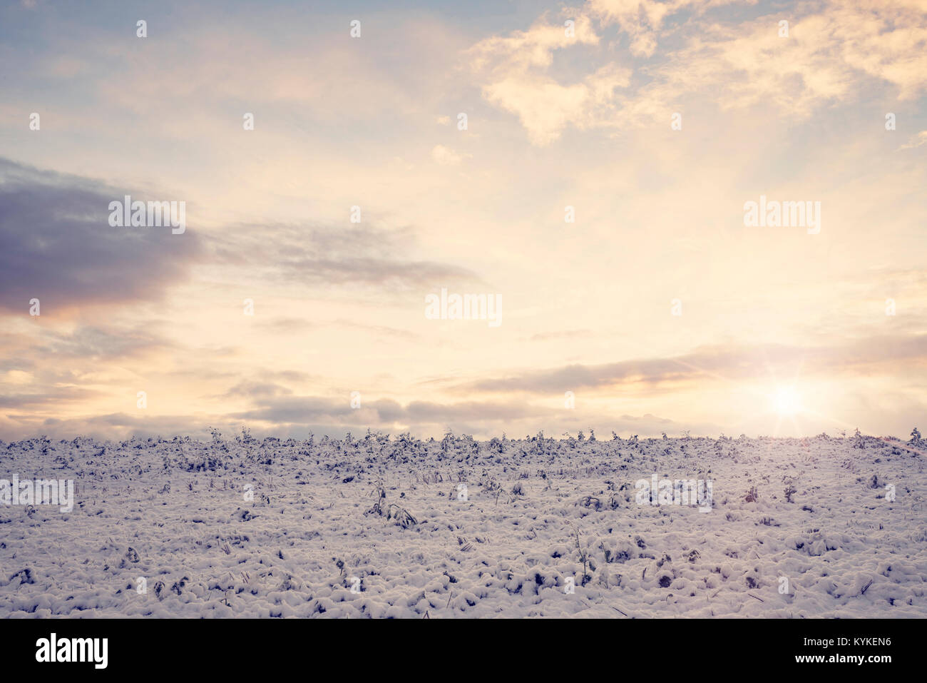 Countryside field with frozen crops in the winter looking cold in the morning sunrise in a rural landscape - Stock Image