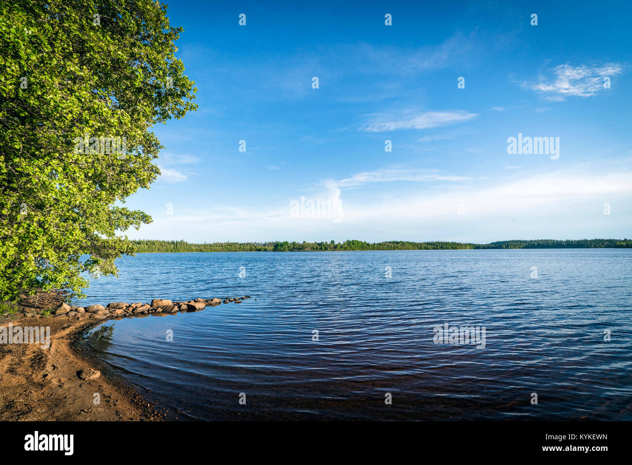 Beach by a large forest lake in the summer with dark blue water and sky - Stock Image