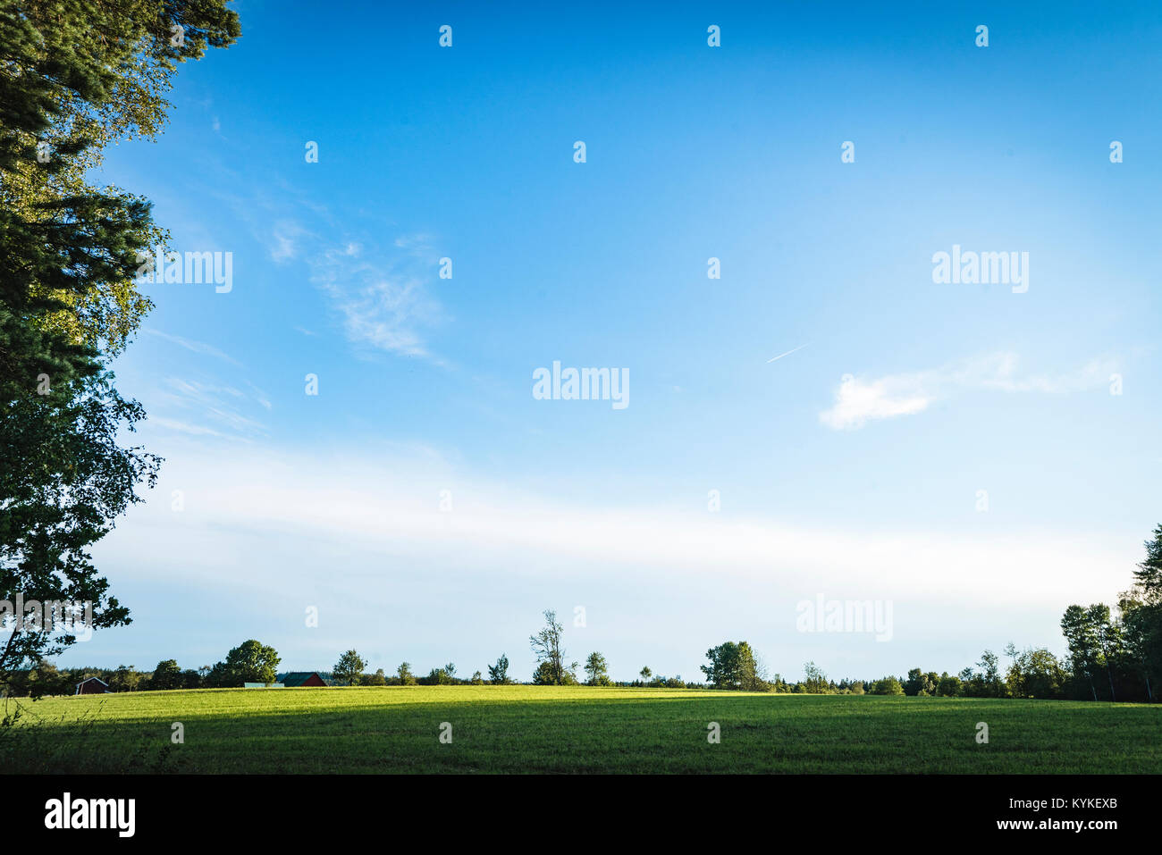 Green field under a blue sky in the spring with trees in the background - Stock Image