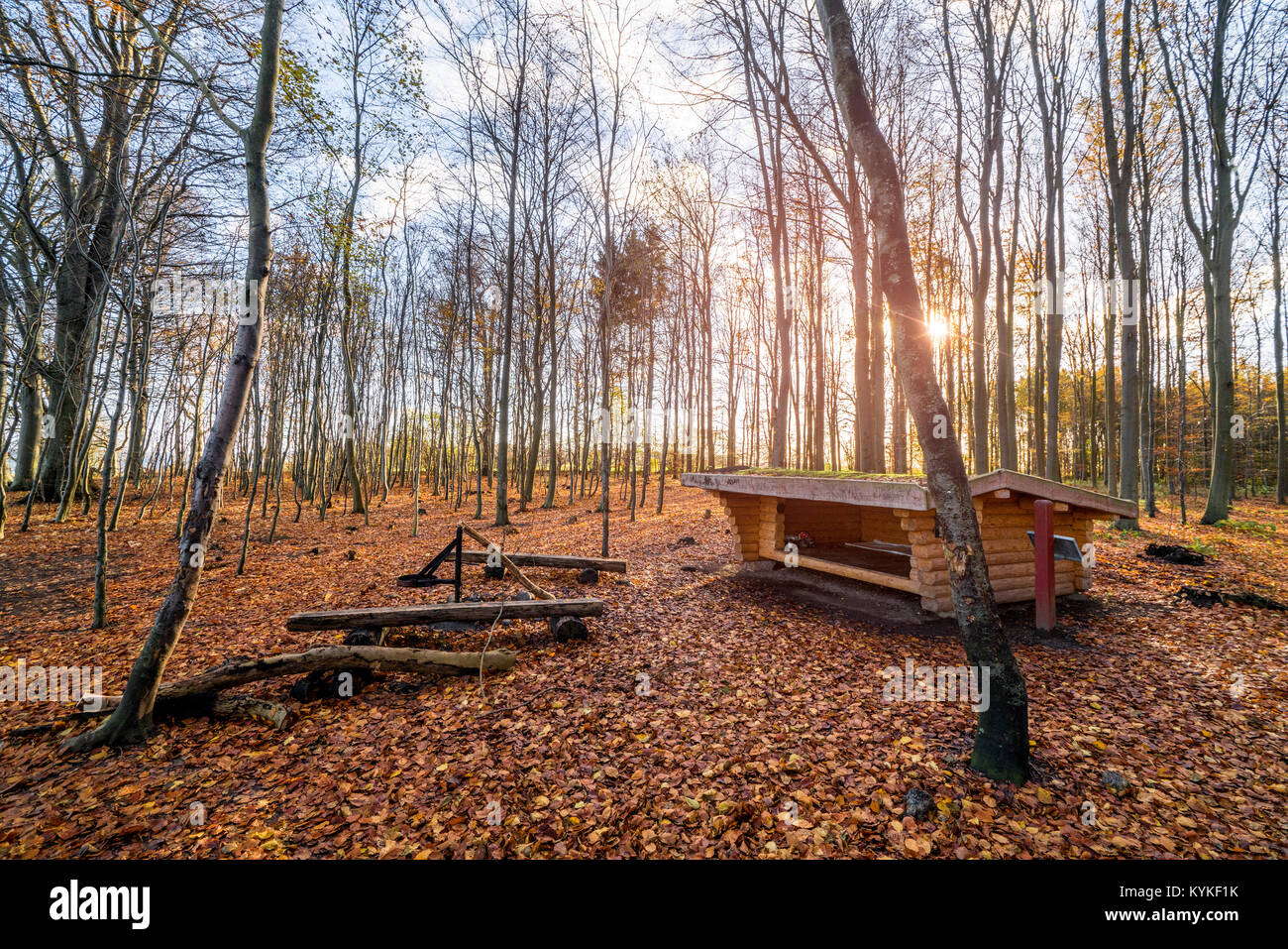 Shelter in a forest sunrise in the fall with tall trees and autumn leaves on the ground - Stock Image