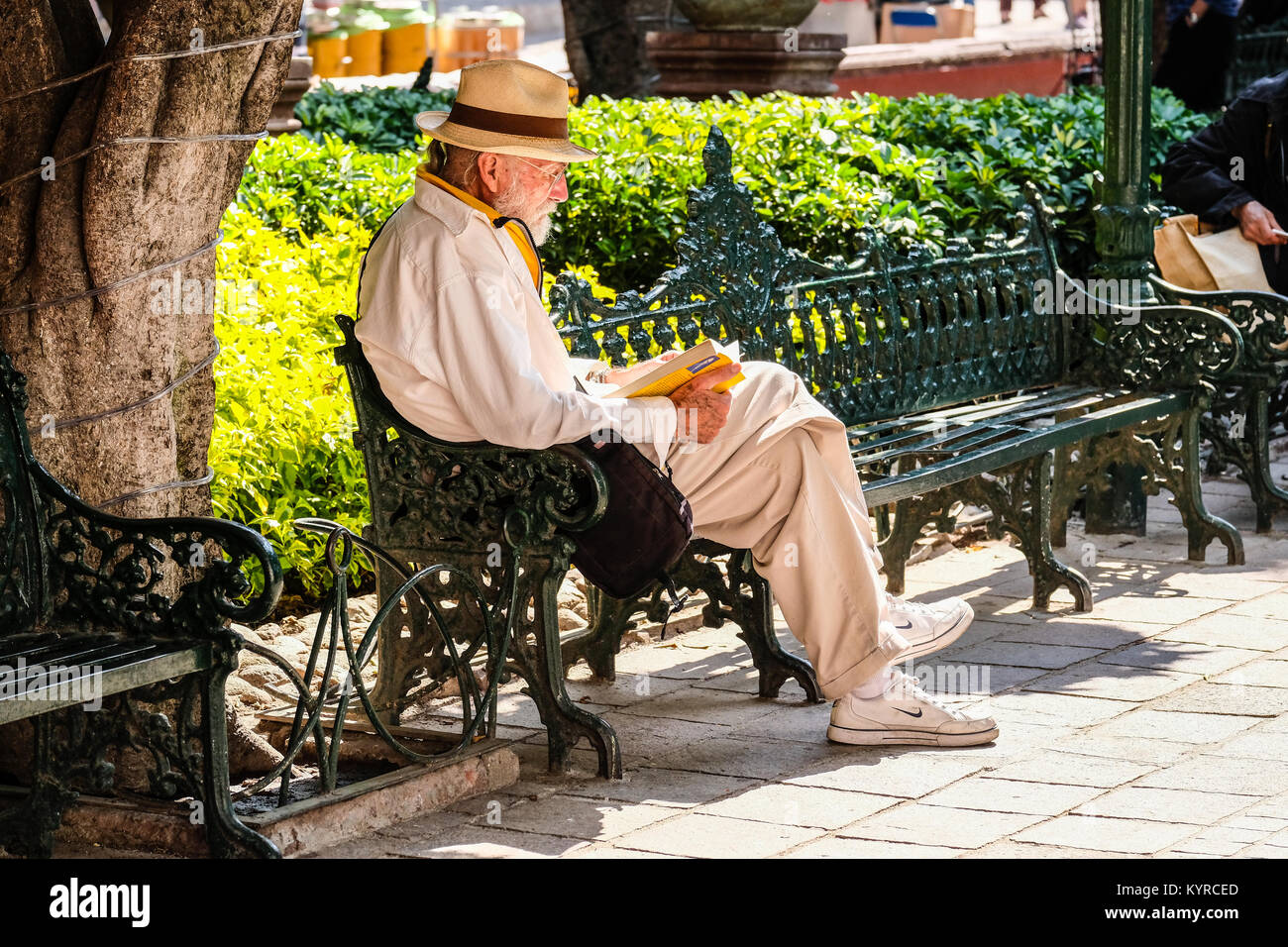 An old gentleman is reading a book on a park bench at El Jardin in San Miguel de Allende,Mexico - Stock Image