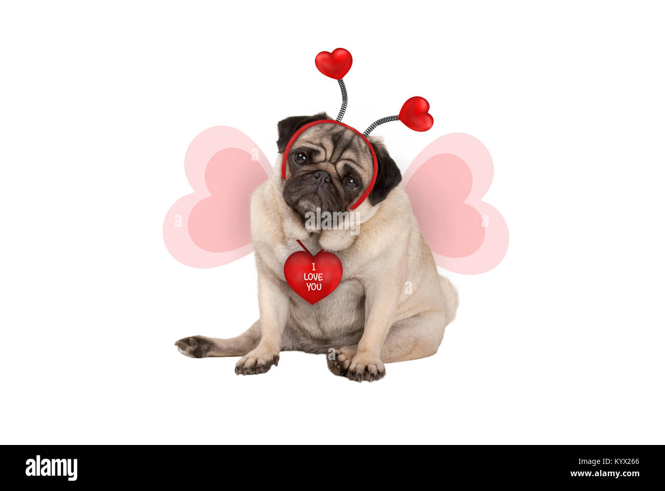 cute Valentine's day pug puppy dog, sitting down, wearing hearts diadem and heart shaped wings, isolated on - Stock Image