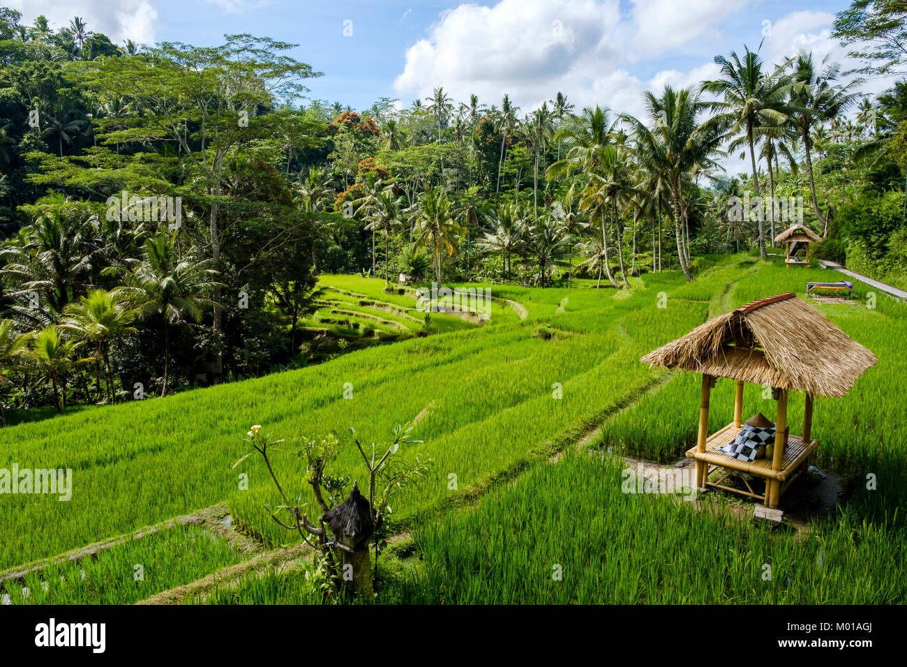 A hut in the middle of rice terraces at Gunung Kawi Temple complex in Tampaksiring, Bali, Indonesia. - Stock Image